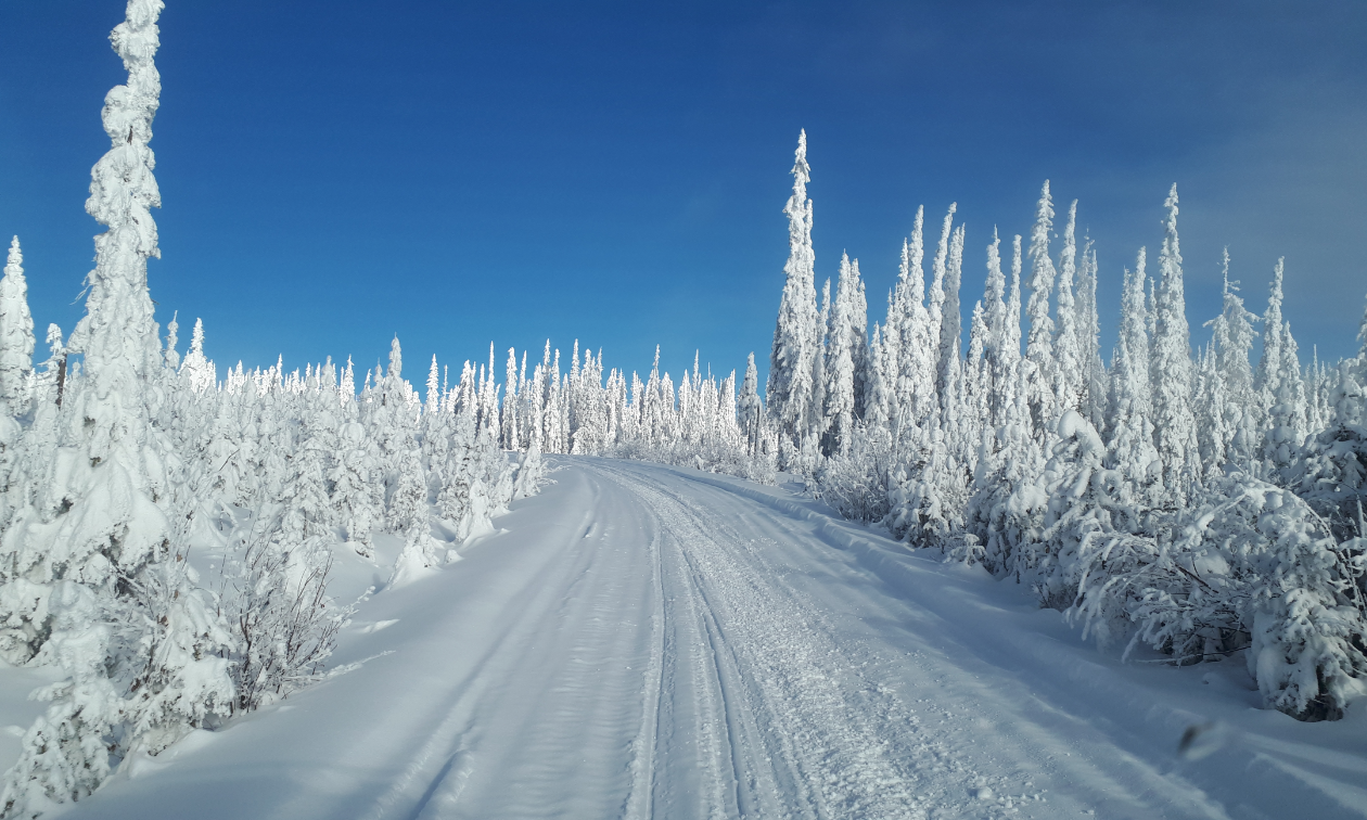 Snow-covered trees jut from the earth like upside-down icicles along a wide, frozen snowmobile path.