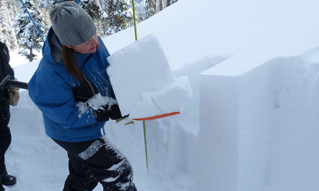 A woman holding a broken layer of snow on a shovel.