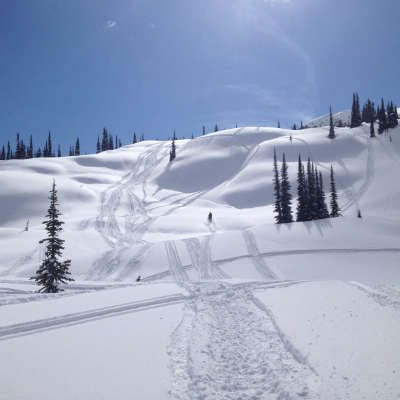 The sun shines on a hillside where a snowmobiler makes fresh tracks.