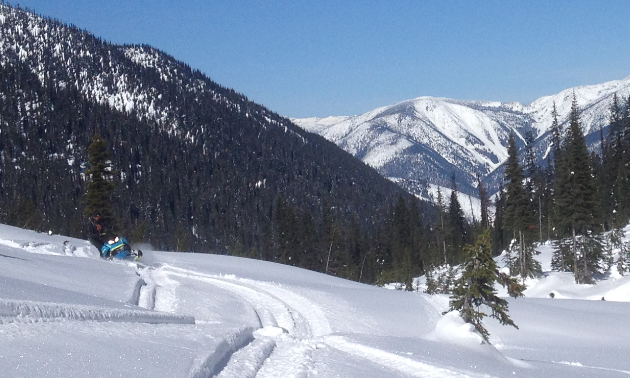 Several snowmobile tracks are laced through the snow amidst mountains and tall trees.