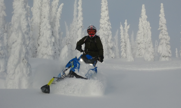 A snowmobiler carves through fresh powder amidst snow-covered trees.