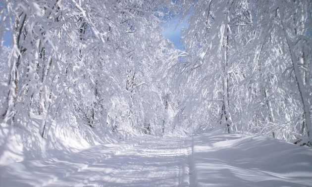 The Thunder & Ice Snowmobile Club's trails have unmatched beauty.
