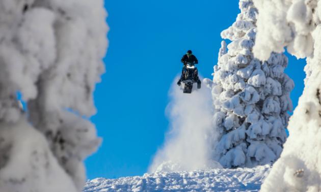 A snowmobiler gets massive air near a tall tree.