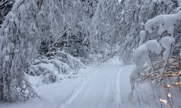 An icicle archway is created across a trail by excessive snowfall on a tree branch