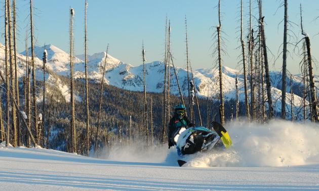 Teena Rumak rides a 2018 Ski-Doo Summit X through burn trees in Revelstoke.