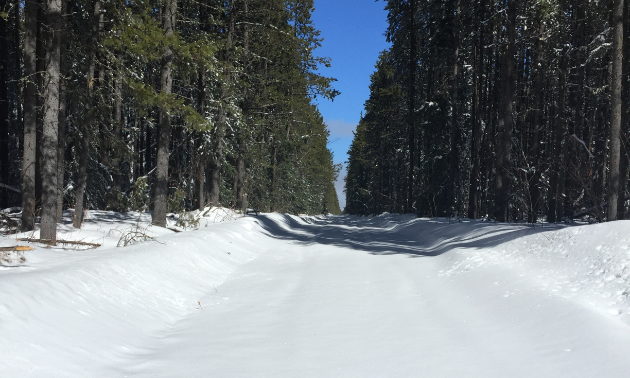 A snowmobile trail between rows of trees.