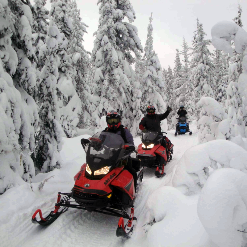 Three snowmobilers ride a tight trail through snow-covered trees.