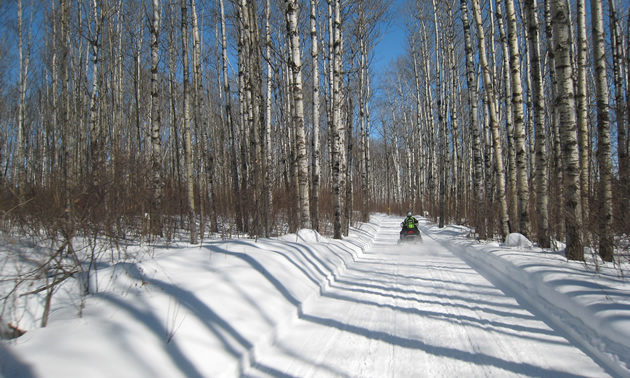 trees, snow, a single snowmobile and blue skies on a snowmobiling trail