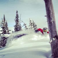 snowmobiler in powder