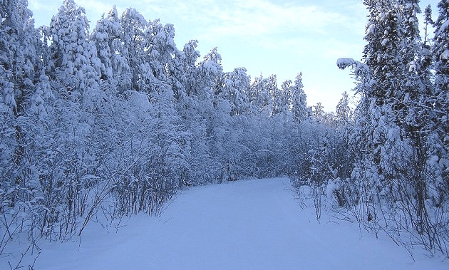 A snow-covered trail near The Pas, MB.