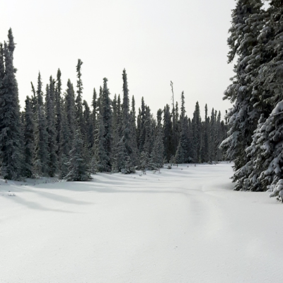Snowmobiling trails in Swan Hills, Alberta.