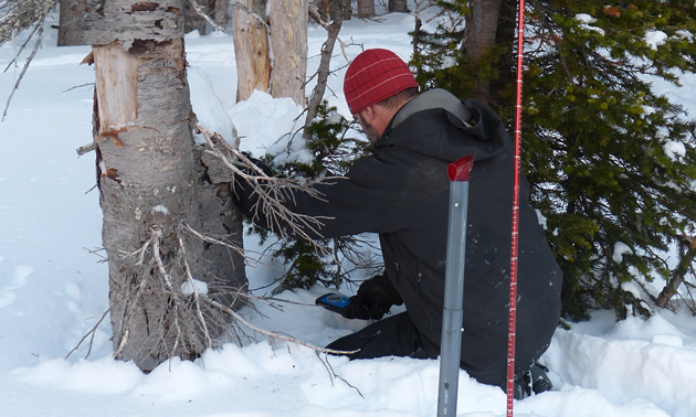 Using a beacon to find an avalanche victim.