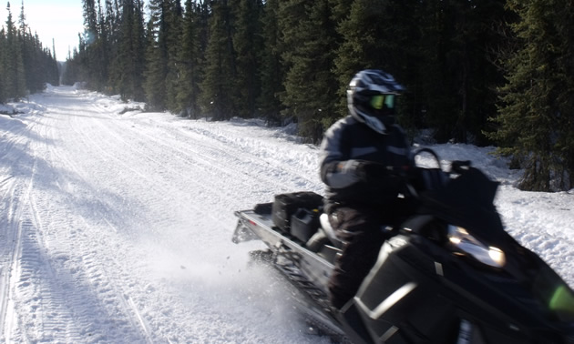 A snowmobiler riding along a trail in Central Alberta.