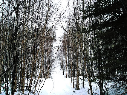 Trails in the Westlock area