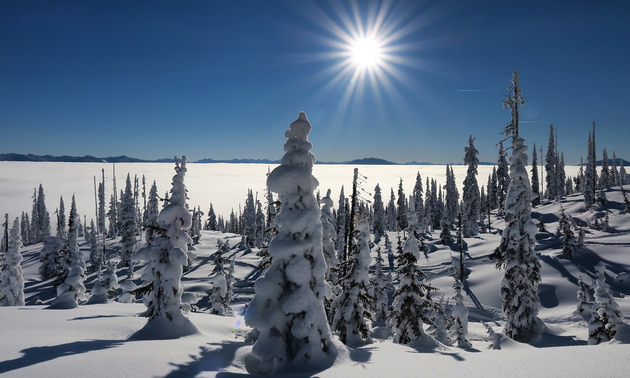 A bright sun shines on snow-crusted alpine trees in Revelstoke.