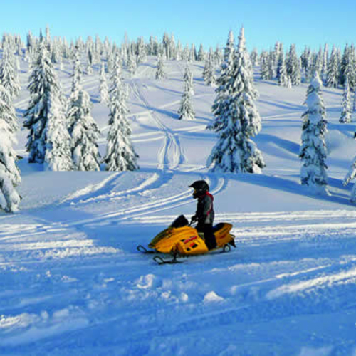 person on a sled in a wintery forest