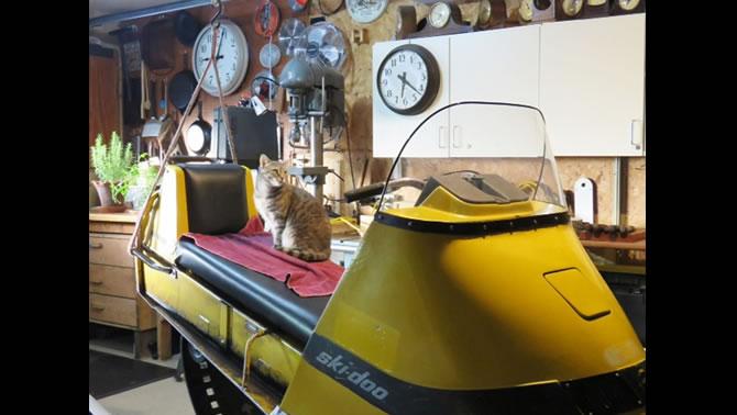 A cat sitting on a vintage Ski-Doo