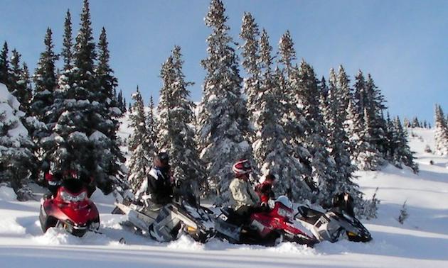 People on snowmobiles near snowy trees.