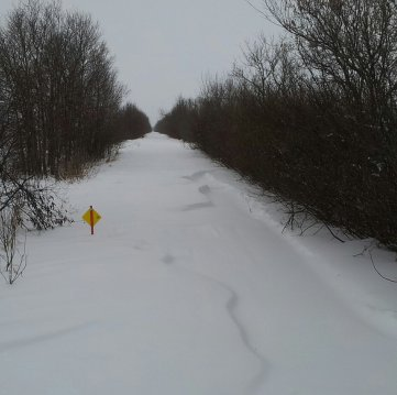A section of Saskatoon trail sits ready to be groomed.  Photo courtesy Gerri Sametts