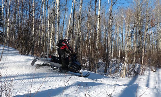 Snowmobiling through aspen groves in Whitecourt.