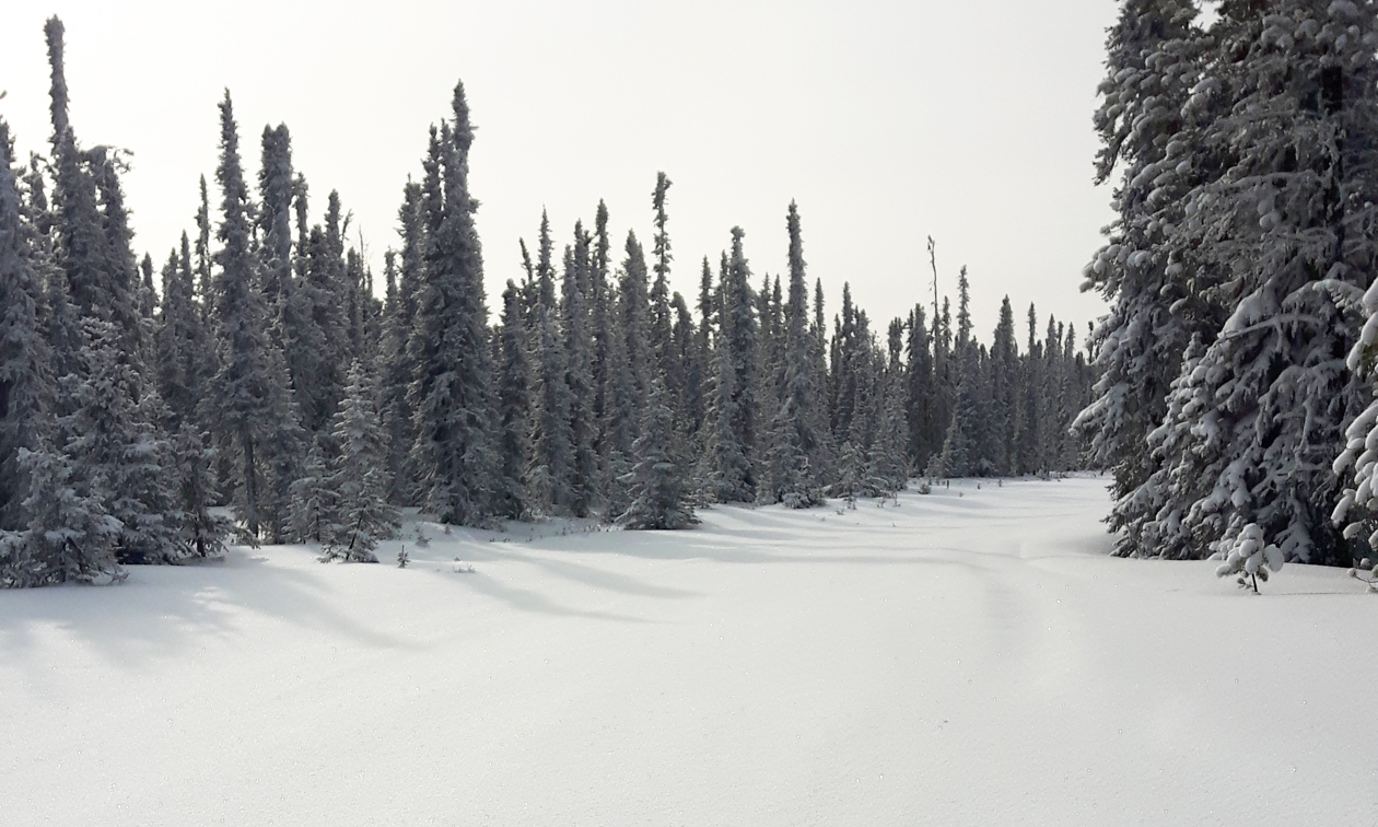 Snowmobiling trails of the Golden Triangle and Trans-Canadian Snowmobile Trail.