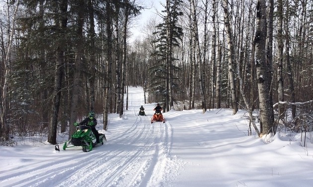 people sledding into a forest