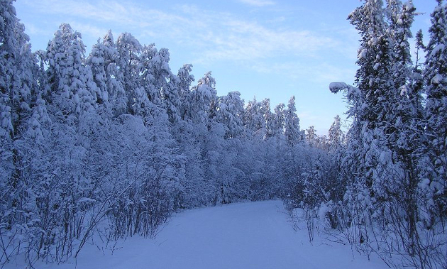 Shown is a trail through beautiful forest in the Kelsey Trail Sno-Riders' region.
