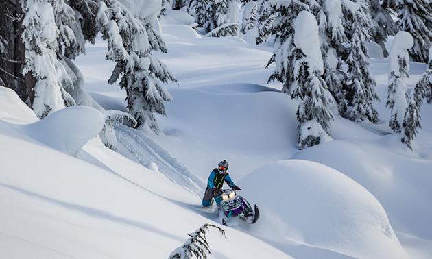 Ryan Thorley riding up a sidehill towards the camera.