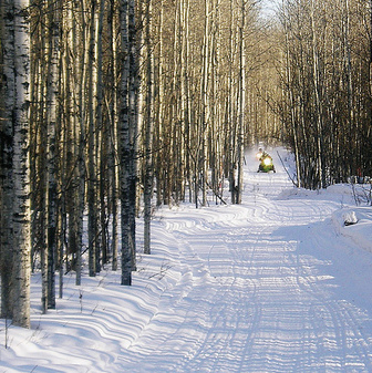 One of the many trails near Westlock, Alberta.  A snowmobiler is coming along the trail in the distance, and there are trees bordering each side of the trail.